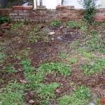 フローリング床の清掃、庭の草抜き 呉市女性スタッフだけの便利屋ワンズ