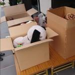 呉市人形供養 感染対策 コロナウイルス 女性スタッフ便利屋 広島県/広島市/呉市